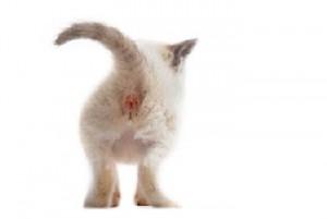 arrière de chaton