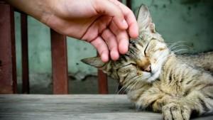Cat_purr-640x360
